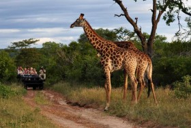 africa_south_africa_giraffes_-1_2